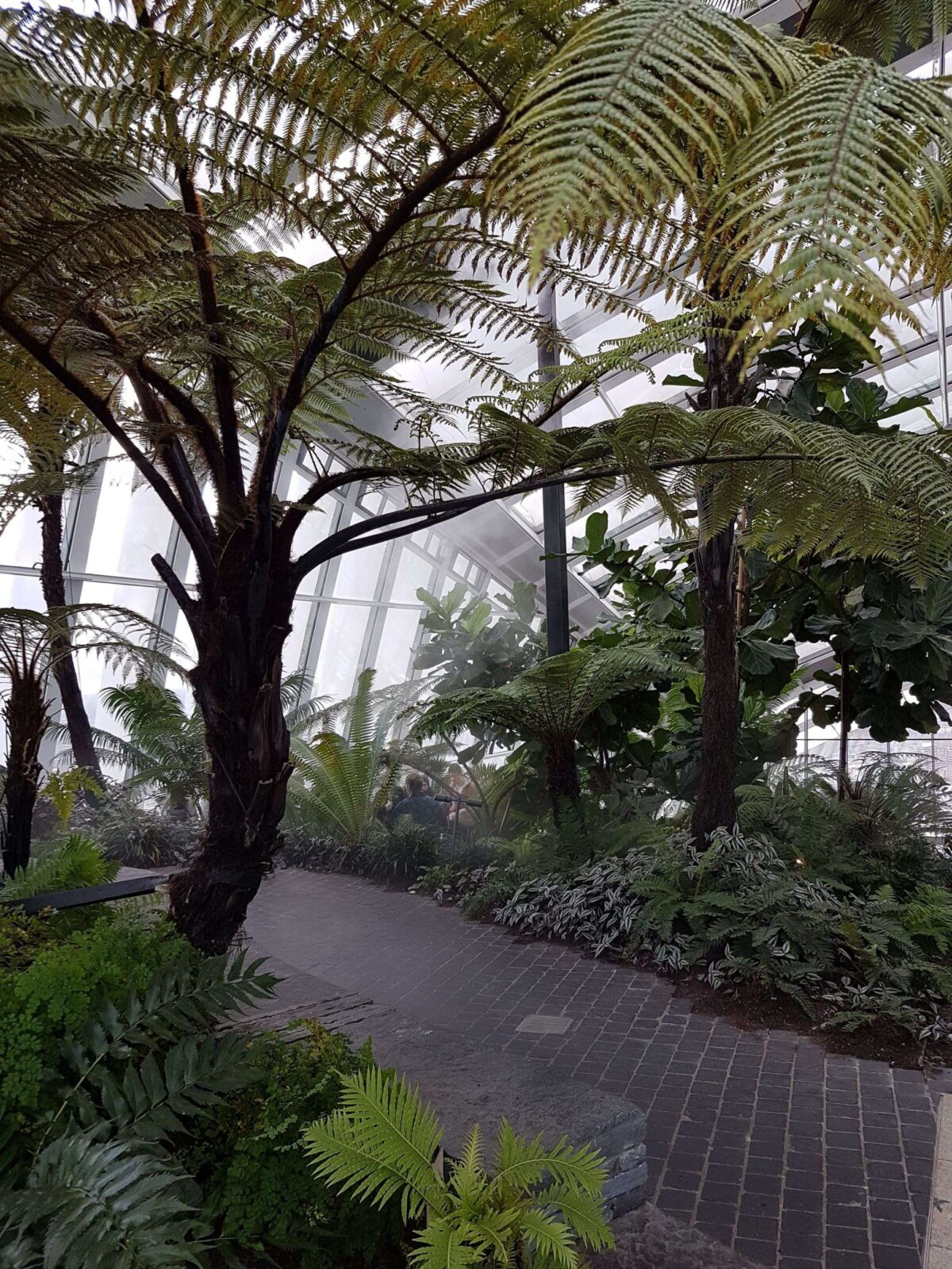 Palm Trees inside Sky Garden