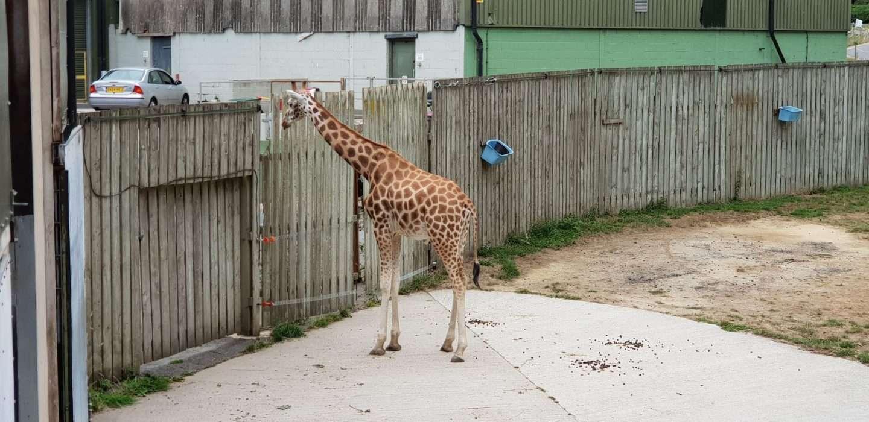 Knowsley Safari Zoo in Prescot