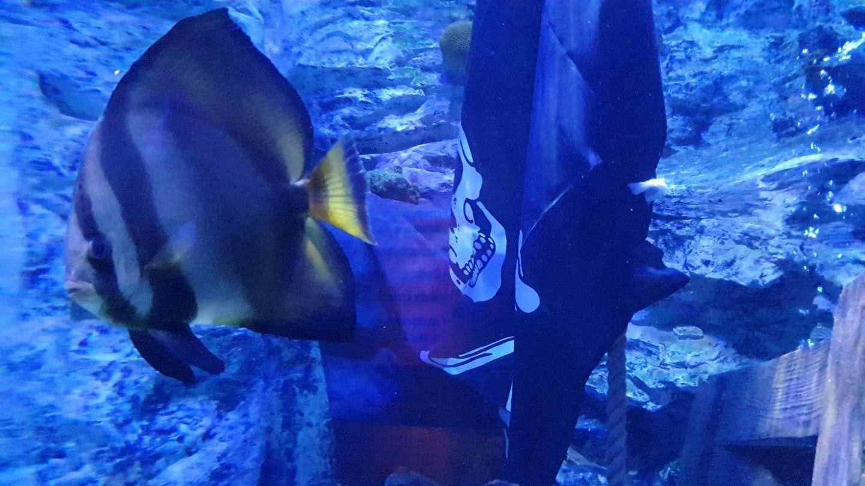Sharkbait Reef By Sea Life